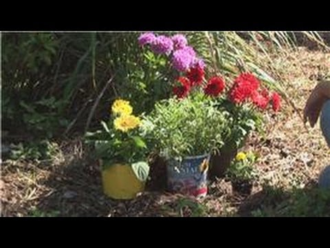 Beginnersu0027 Gardening Tips : Garden Decoration Tips