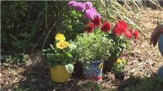 Beginners' Gardening Tips : Garden Decoration Tips