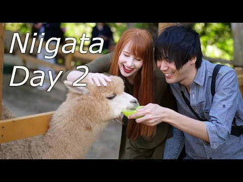 The Cutest Animals in Niigata Prefecture [Northern Japan]