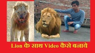 Real Effect-Lion Ke Sath Video Kaise Banaye, || Green Screen Tiger || Croma Key || Kine Master ||