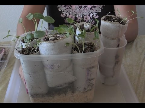 How to Germinate Any Seeds. This Method Saves Space and Money! Harley Seeds / Organic Freak