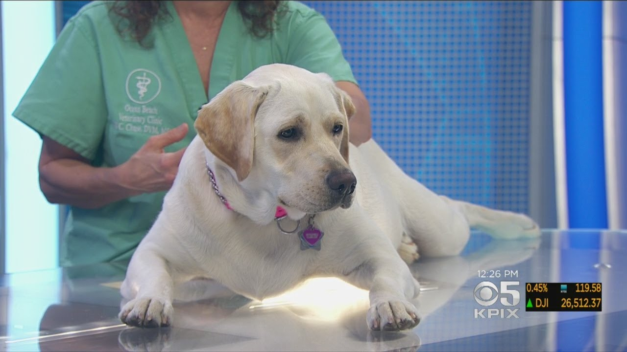 PET EXPERT: Dr. Jill Chase Answers Questions About A Dog Licking His Pillow