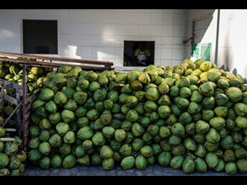 How to Get an Export Order in Tamil?(For Coconut)