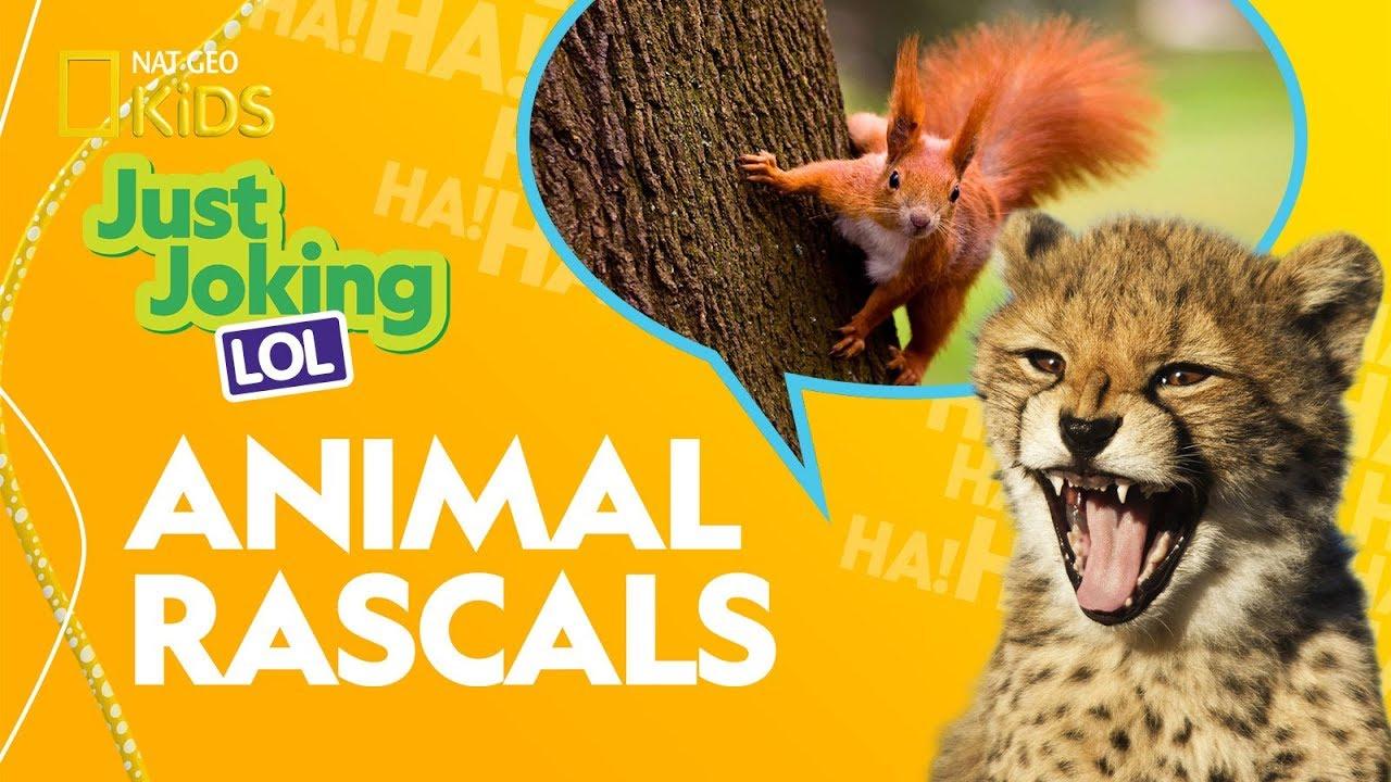 Animal Rascals | Just Joking—LOL
