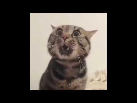 КОТ ГОВОРИТ ДАЙ ПОЖРАТЬ Приколы с котами 2019 BEST