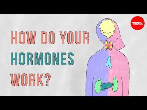 How do your hormones work? - Emma Bryce