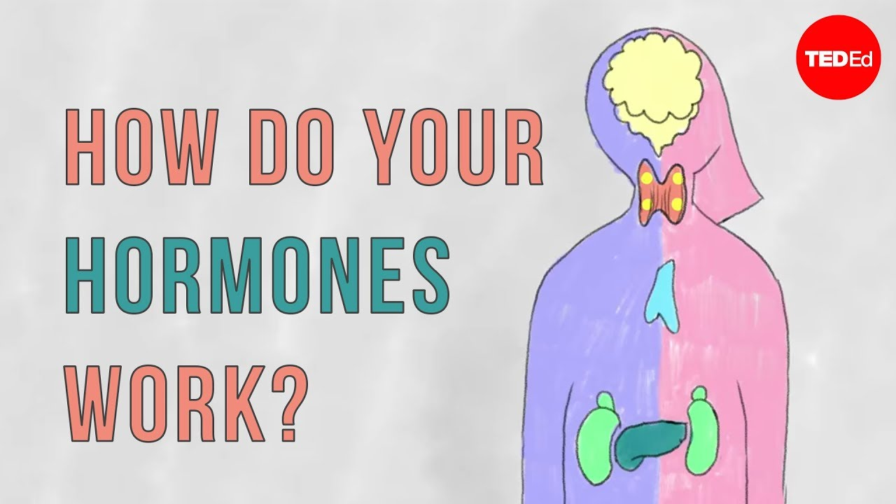 How do your hormones work? - Emma Bryce