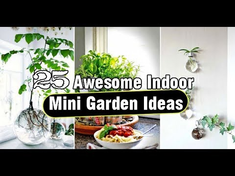 25 Awesome Indoor Mini Garden Ideas Youtube