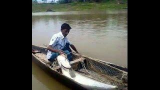 পদ্মা নদীতে সরাসরি বোয়াল মাছ ধরা (VIDEO )  catching fish in padma river
