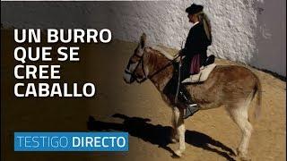 Un burro que se cree caballo - Testigo Directo HD