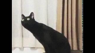 Ні хуя собі, ебанутся кіт