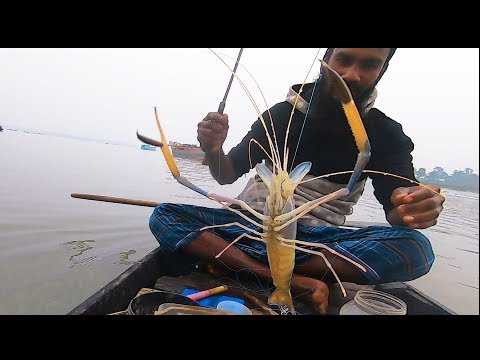 Very Nice!! Really Amazing River In Shrimp Fish Hunting By Hand Hook Trap!!!