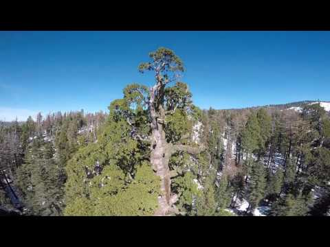 Kings Canyon National Park - Giant Sequoias
