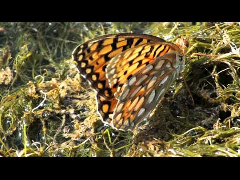 Butterfly Swamp