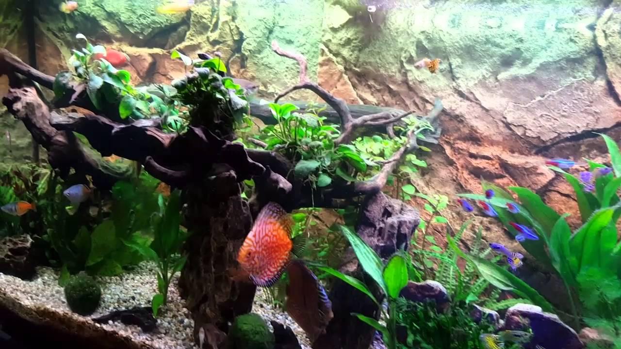 Juwel rio 240 aquarium fish tank - Juwel Rio 240 Planted Tank With Colourful Fresh Water Tropical Fish