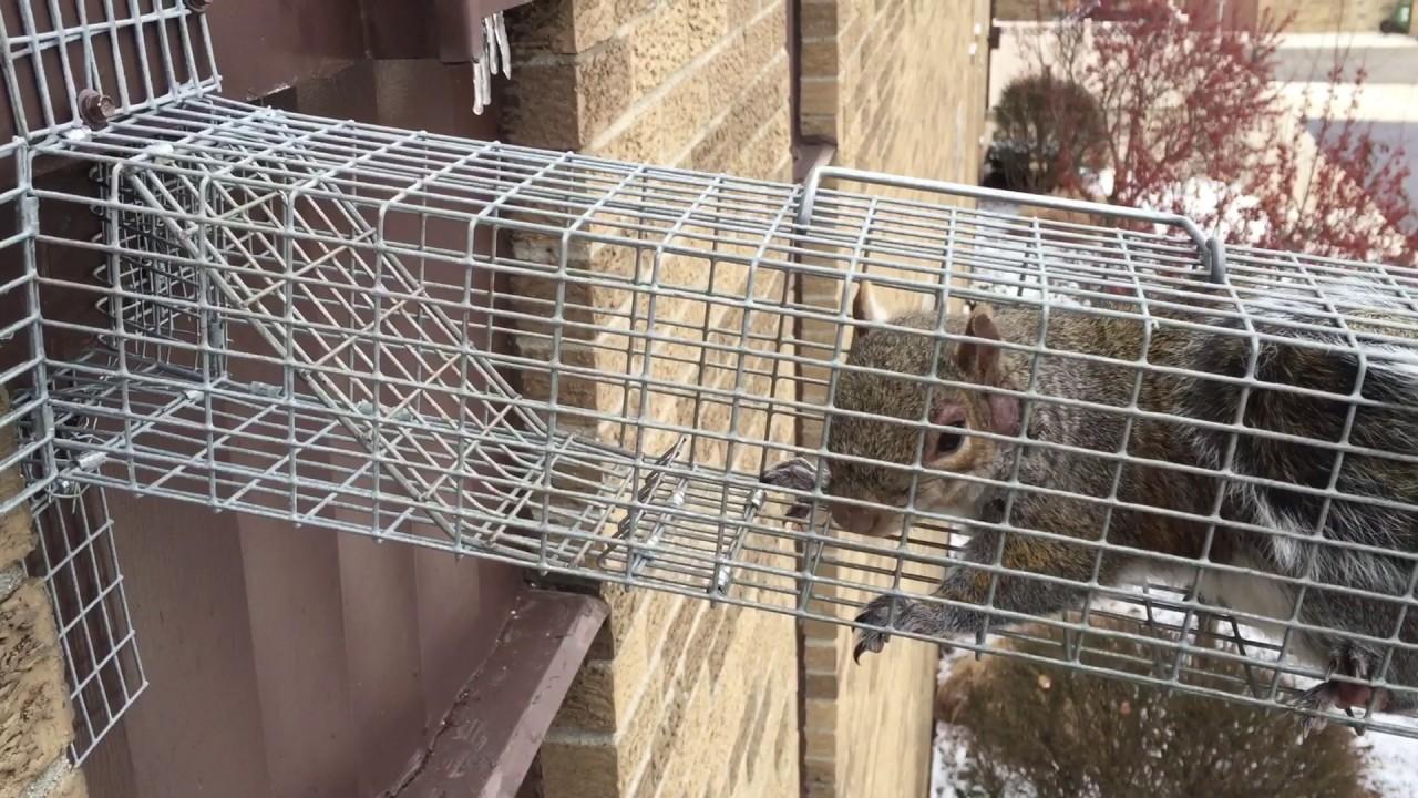 barnes bee city of biz honey united troy wildlife photos photo yelp control ohio o states removal tipp oh barns
