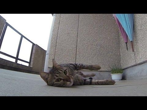 Cat Loves Flopping Around On Concrete Floor (VIDEO)