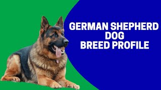 German Shepherd Dog Breed Profile