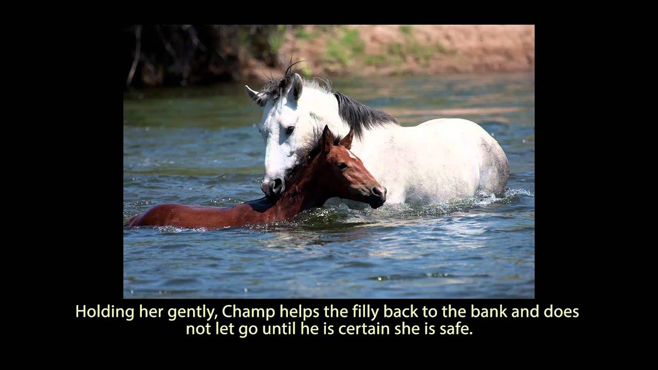 Contador Un caballo salva a otro de morir ahogado