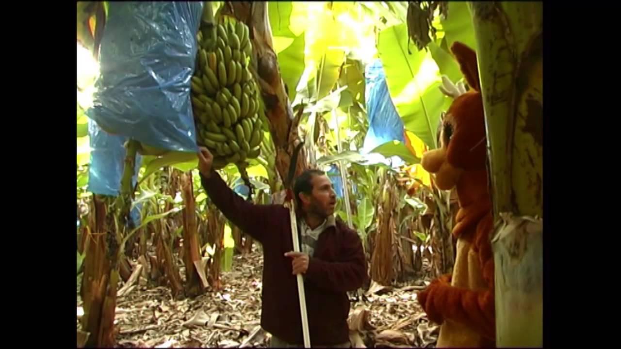 """במבי במטעי הבננות - קטע מתוך סרטי """"ניצוצות של קדושה"""""""