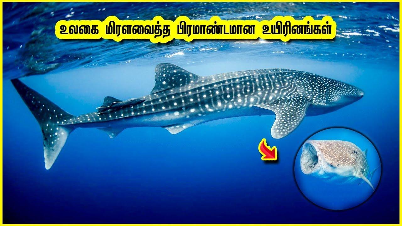 உலகை மிரளவைத்த பிரமாண்டமான 10 உயிரினங்கள் | Top 10 Biggest Animals