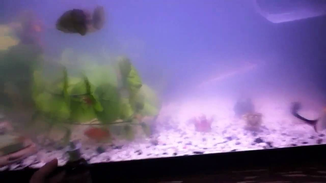 Fish tank water cloudy - Testing Acurel F For Cloudy Foggy Water In Fish Tank