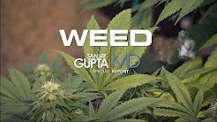 Dr Sanjay Gupta: Weed - CNN Special Documentary