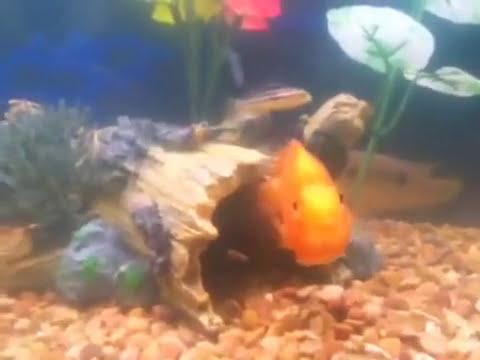 Fish swimming backwards youtube for Fish swimming backwards