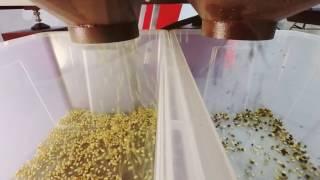 Очистка кедрового ореха на фотосепараторе Зоркий (2017)
