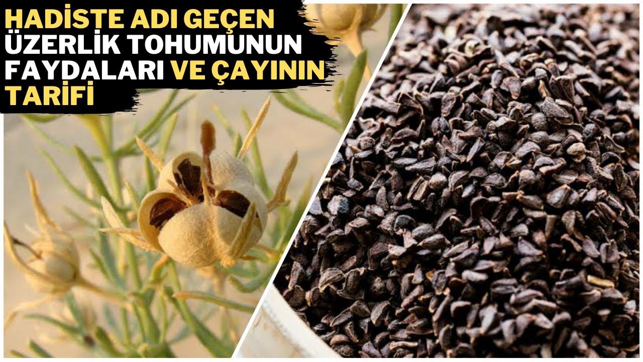 ÜZERLİK TOHUMUNUN İNANILMAZ FAYDALARI - Üzerlik Tohumu Çayı Nasıl Yapılır - Üzerlik Tohumu Zararları