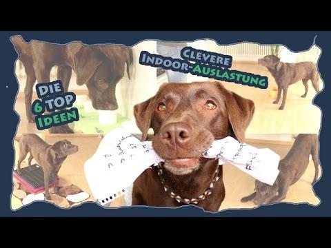 Hundetraining - Die 6 Top Ideen zur cleveren Indoor-Auslastung