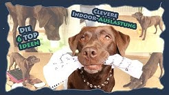 Hundetraining - Die 6 Top Ideen zur cleveren Indoor-Auslastung