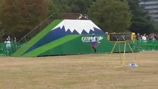 立川 昭和記念公園 ドッグスポーツエクストリームチャンピオンシップ 決...