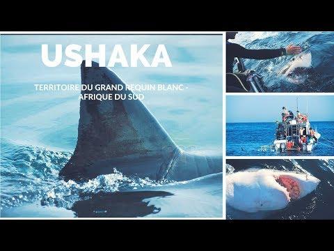 Ushaka Territoire du Grand Requin Blanc - Afrique du Sud