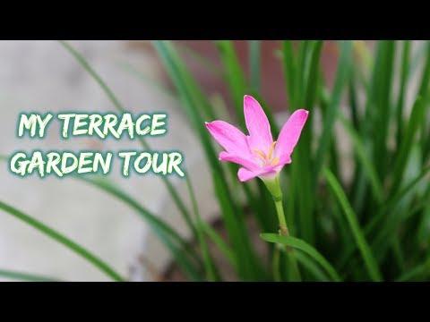 my-terrace-garden-overview-month-of-august-2019-||-garden-tour-monsoon