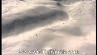 An aerial view of Heli-skiing in the wintery Himalaya