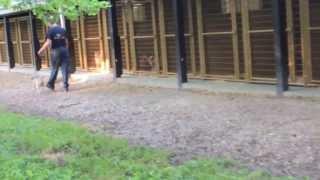 Alden's Kennels Inc. Dog Walking Crystal Lake Il
