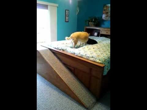 dog-ramp-to-bed