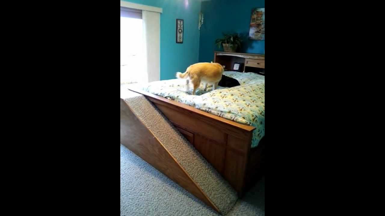 Dog Ramp To Bed Youtube