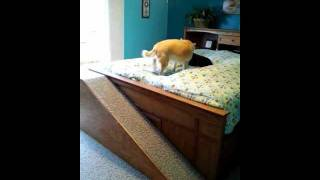 Dog Ramp To Bed