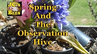 Spring And The Observation Hive Build Up