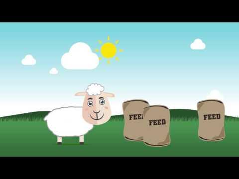 Sheep and cattle grain feeder Advantage Feeders