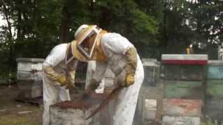 Beekeeping, Beekeepers at Work Supering Beehives for Honey Production in Ontario Canada
