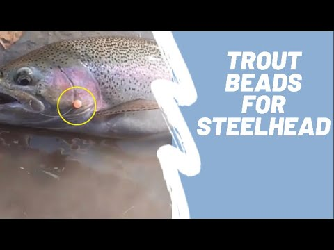 Steelhead Alley Fishing | Drifting Trout Beads For Fresh Steelhead