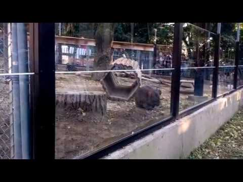 Satsuki Yama Zoo Ikeda city Osaka prefecture,Japan 3rd November,2017 MOV WMV