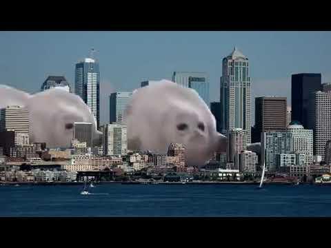 Bouncing Seals