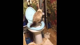 Кошка в туалете))прикол