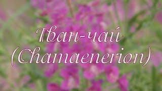 Іван-чай. Chamaenerion