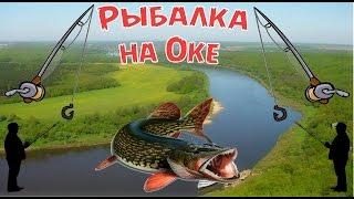 Риболовля на Оці    Як москвичі їздять на рибалку в регіони Росії