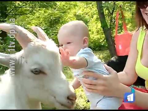 У селі на Дніпропетровщині тварини допомагають у лікуванні дітей